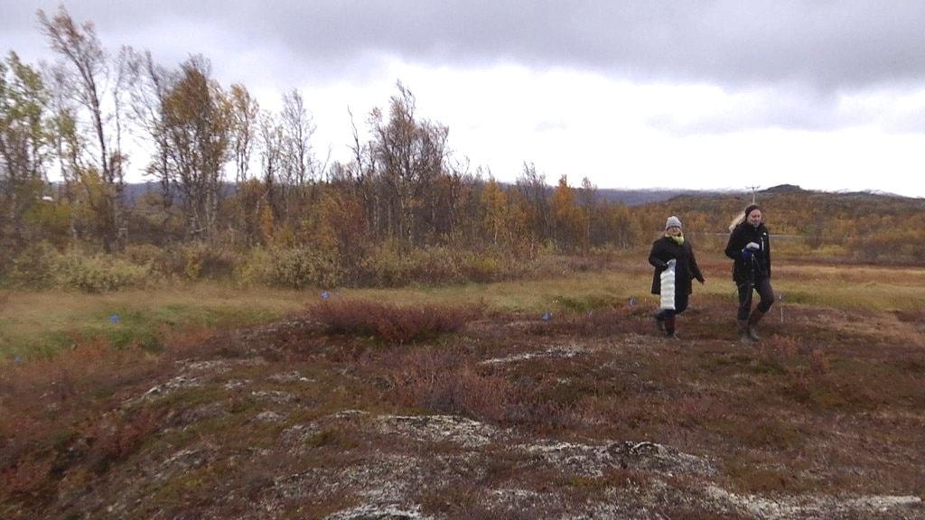 Forskaren Ruth Varner mäter kvicksilver-nivåer i Abisko.