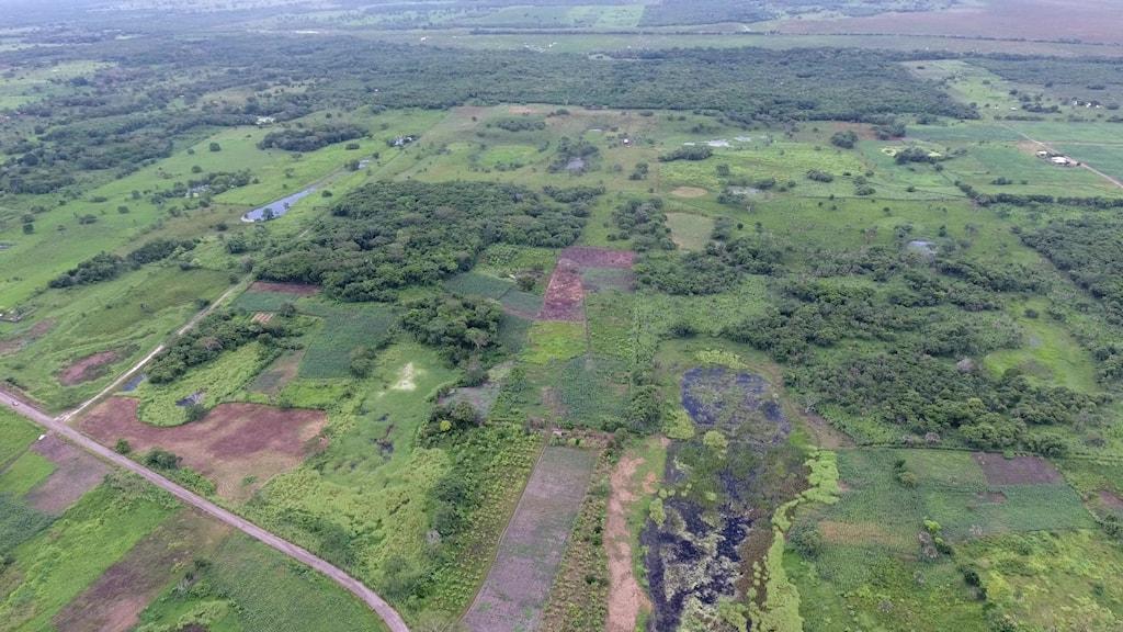 Flygbild över ett område med skog och en väg.