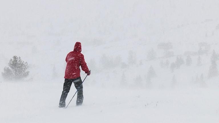 Skidåkare i snöstorm.