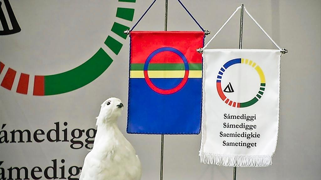 Uppstoppad ripa står bredvid den samiska flaggan och Sametingets flagga på ett bord.