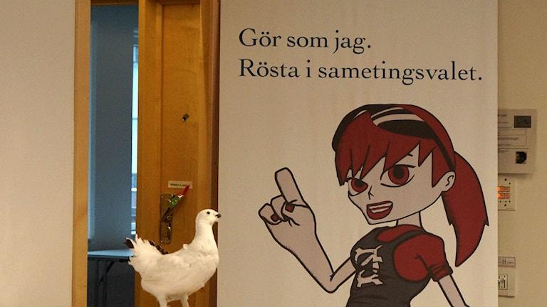 Sametignets uppmaning att rösta i valet 2013. Foto: Anna Sunna / Sameradion