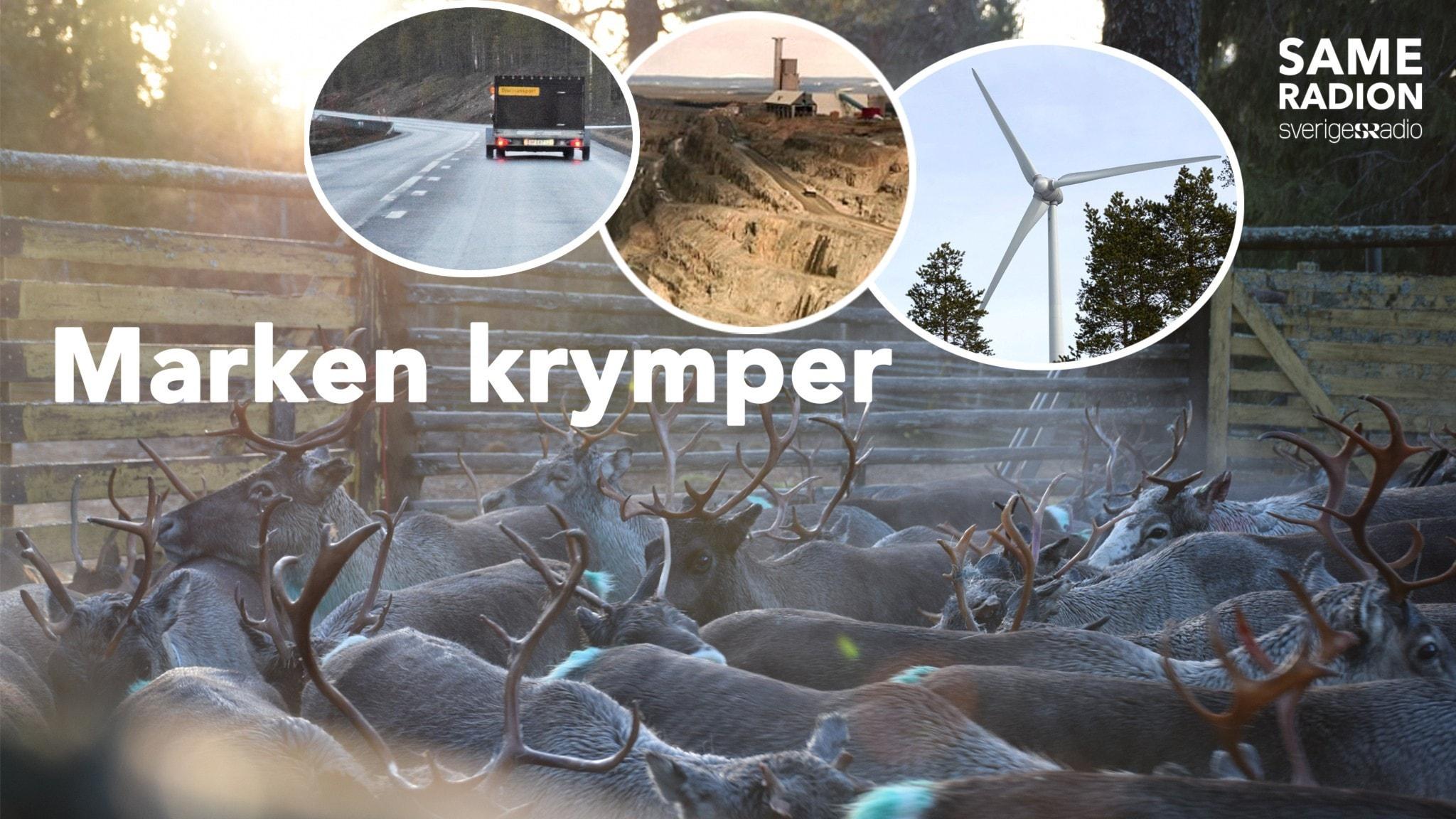 Premiär för serie om samebyns krympande marker - Sameradion & SVT Sápmi