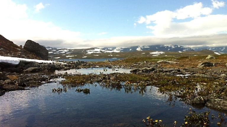 Det arktiska området påverkas hårt av klimatförändringarna. Här vy över Stekenjokk. Foto: Mikaela Sjöstedt/ Sameradion & SVT Sápmi.