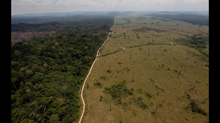 Skövling av regnskog i Amazonas. Foto: Andre Penner/ TT