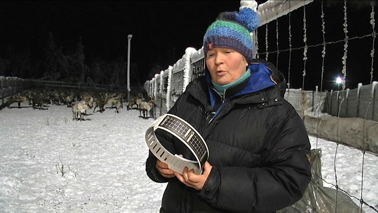 foto: Olle Liman/SVT Sápmi
