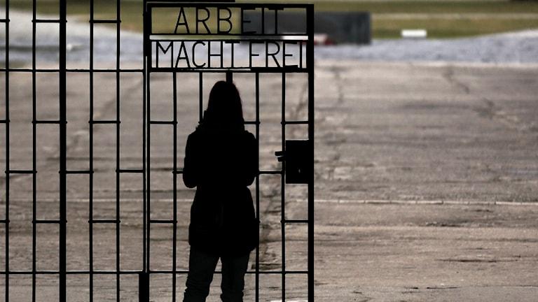 Auschwitz. Foto: Markus Schreiber/ AP/ TT
