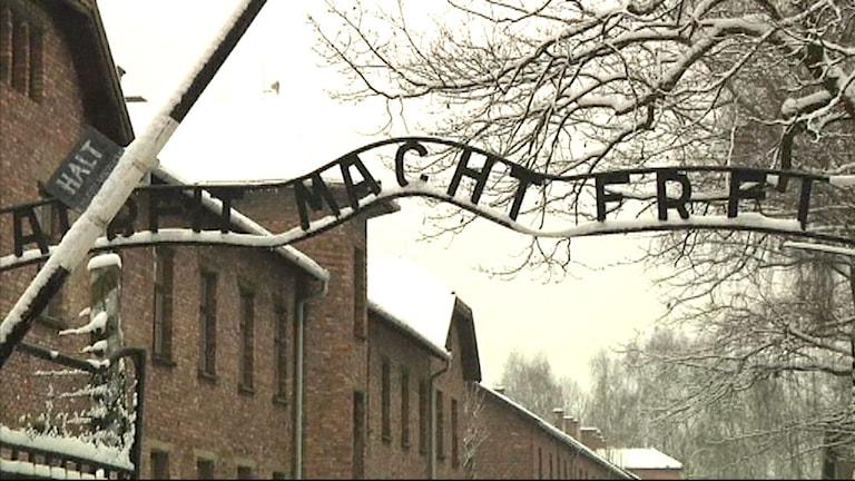 Auschwitz koncentrationsläger. Foto: SVT
