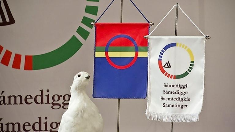 Foto: Olle Liman/ Sameradion & SVT Sápmi