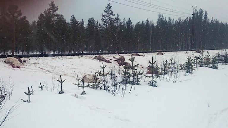 Synen som mötte Anders Skum vid järnvägen. Foto: Privat