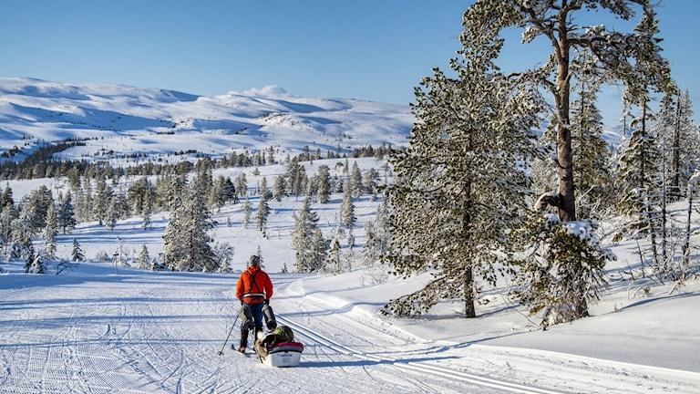 Svenska turistföreningen stänger alla sina 44 fjällstugor.