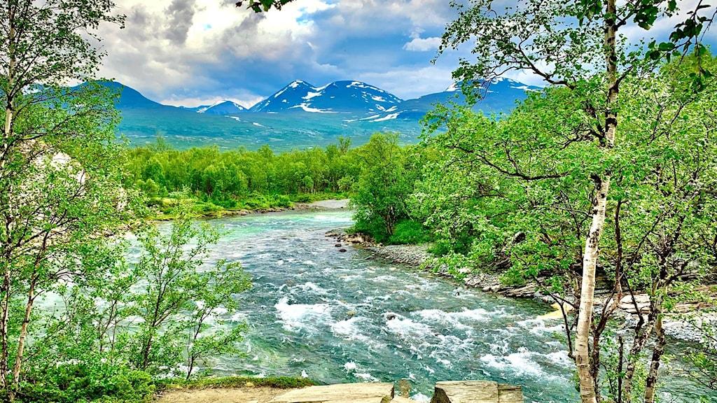 Sommar, fjällvärld, fjäll, vildmark, vatten,