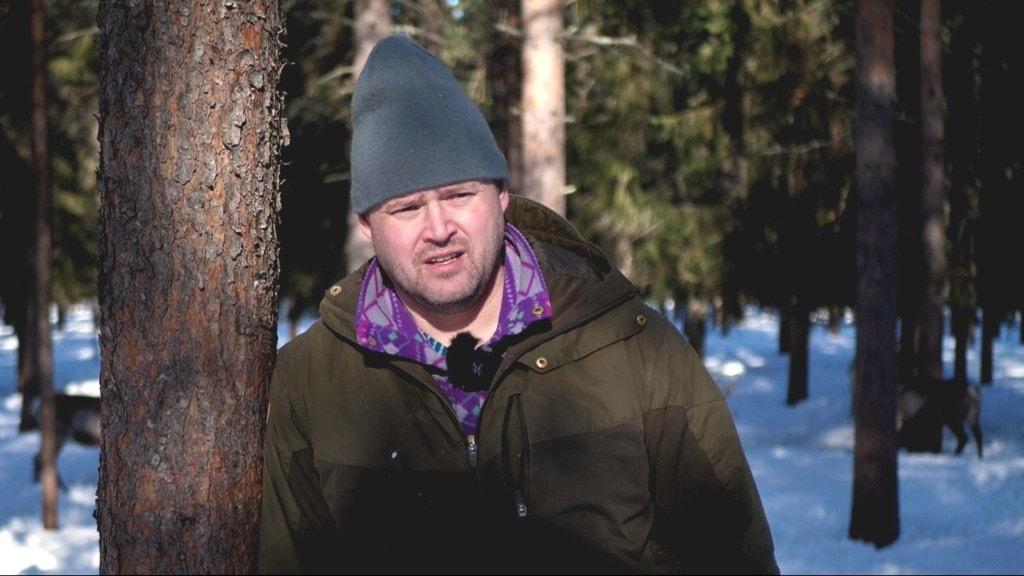Jörgen Stenberg har matat sina renar sju av senaste tio åren på grund av dåligt renbete. Han menar att klimatförändringar och klimatanpassningar är en stor utmaning för rennäringens framtid.