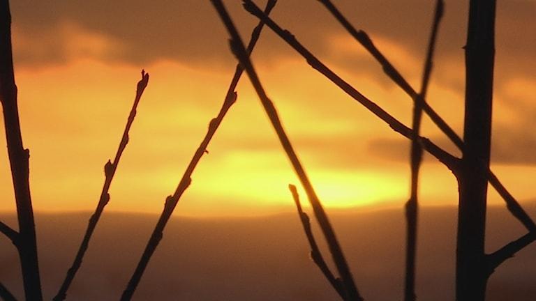 Drygt en vecka till kan vi se solen kika fram, i Kiruna. Sedan väntar polarnatten. Foto Stefan Karlsson, Sameradion & SVT Sápmi.