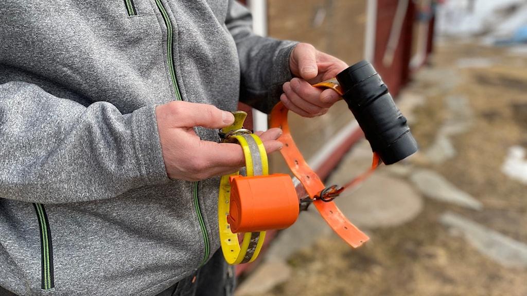 gult och orange halsband med sändare för renar