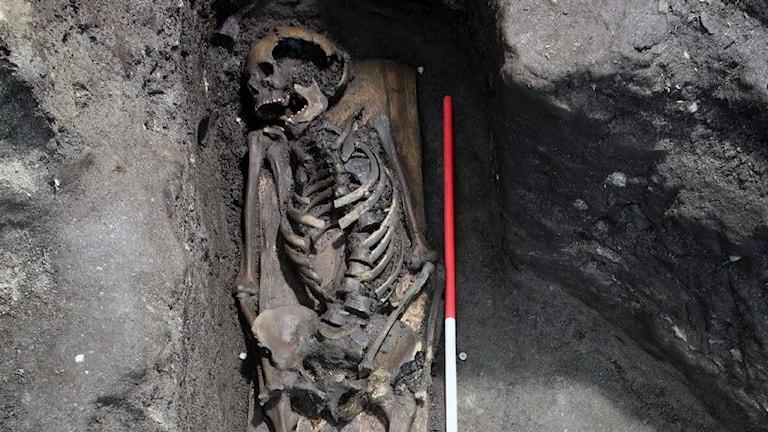 Ett ovanligt välbevarat skelett från 1000-talet har hittats under en utgrävning i Trondheim.