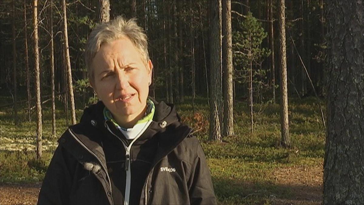 Sveaskogs vd Hannele Arvonen fick gå med omedelbar verkan (arkiv).