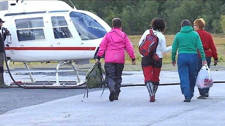 De tar helikoptern för att plocka kantareller i fjällen