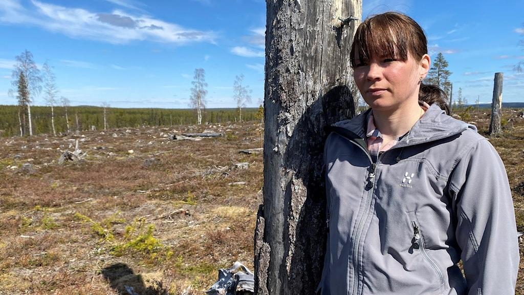 Katarina Sevä, renskötare i Muonio sameby, vid ett kalhygge utanför byn Keräntöjärvi.