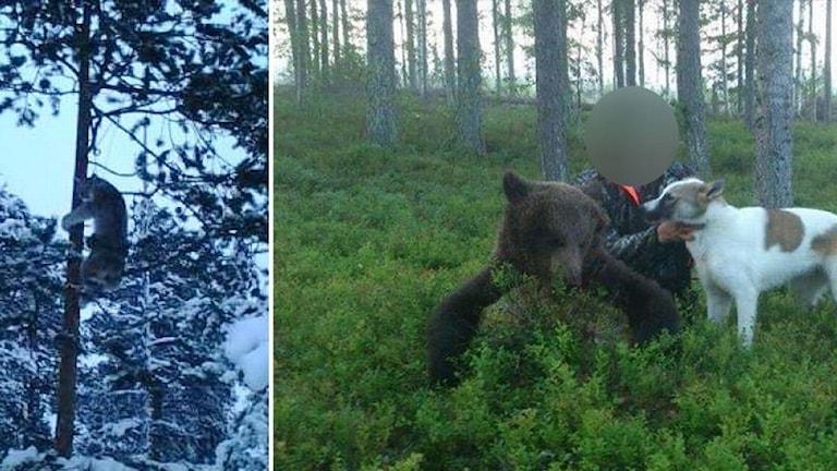 Bilder på dödade och plågade rovdjur som är bevismaterial i Jaktbrottshärvan vid Luleå tingsrätt