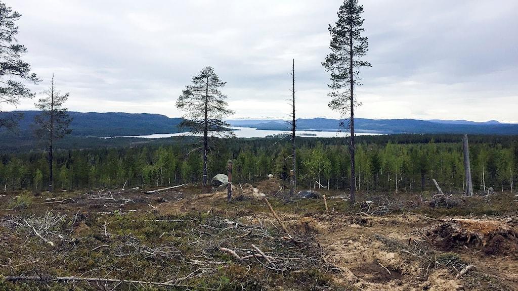 Kallak några mil väster om Jokkmokk.