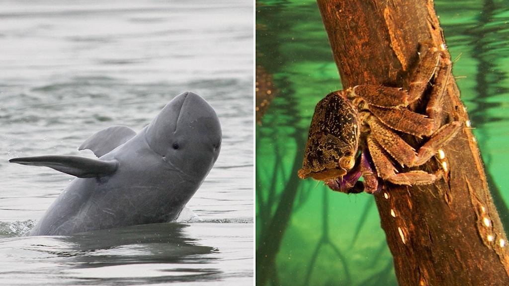 Delfin plaskar i vattnet och groddjur på kvist