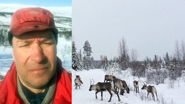 Jonas Kråik ordförande renägare Handölsdalens sameby