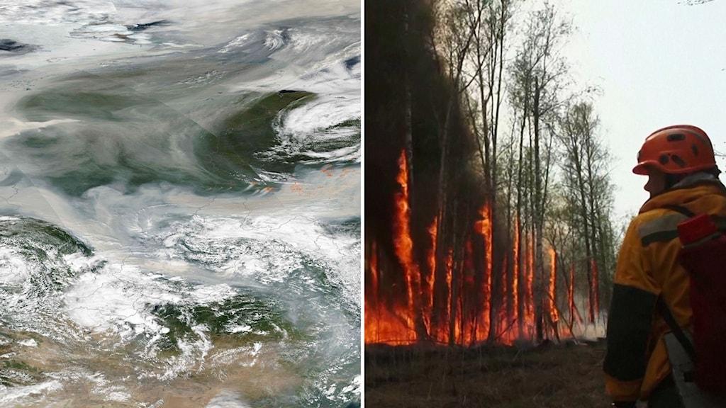 Det brinner i Sibirien - nu har röken nått Nordpolen