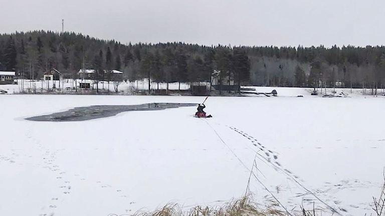 Räddningsinsats av två renar som gått genom isen vid Norsjövallen