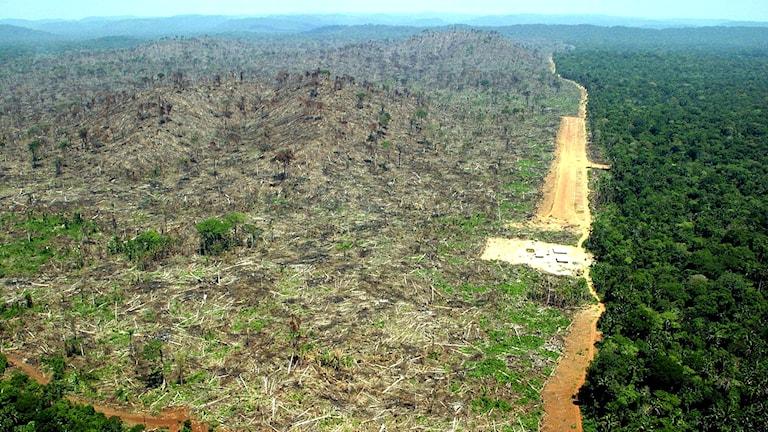 Avskogning, skövling av Amazonas regnskog