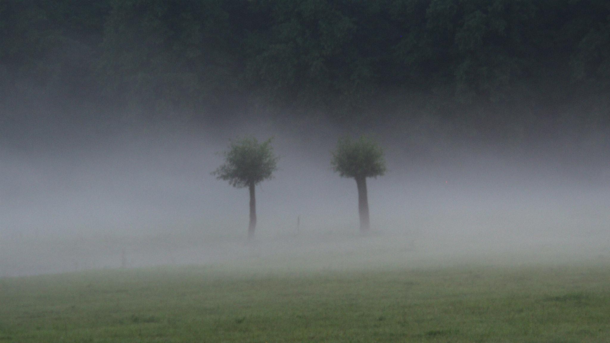 Träd. Foto: Rogiro/flickr