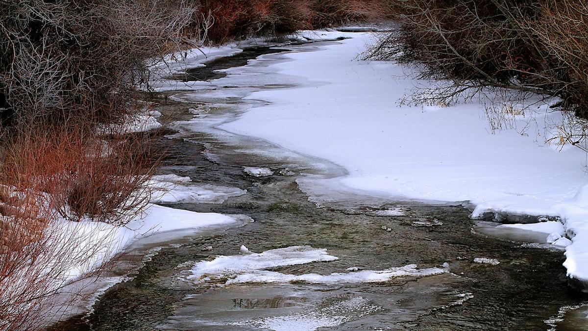 Vinterflod