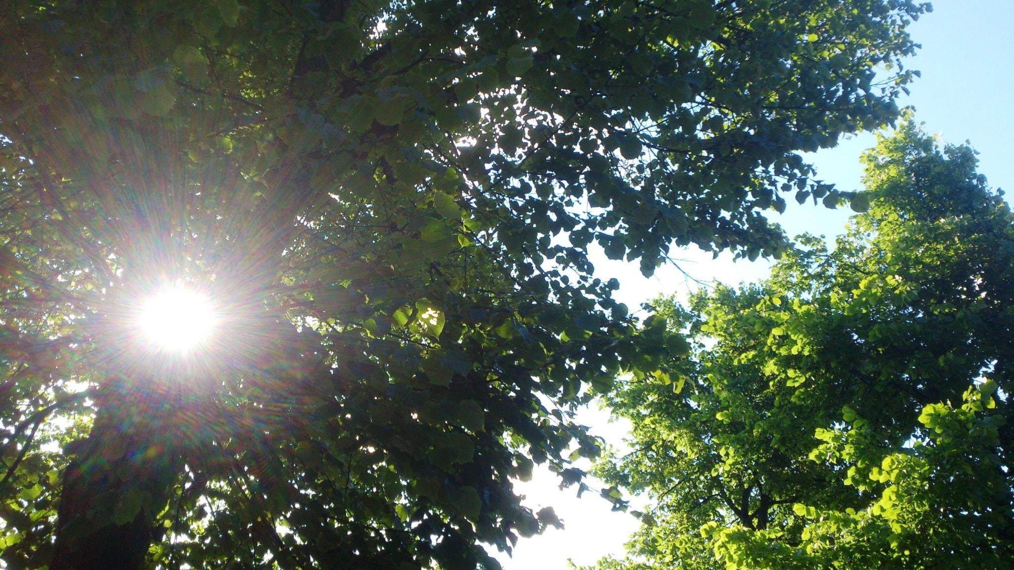 Sol genom lövverk