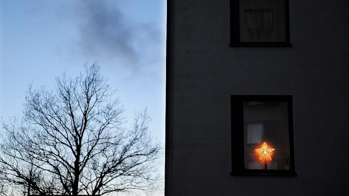 Adventsstjärna. Foto Anders Wiklund/TT.