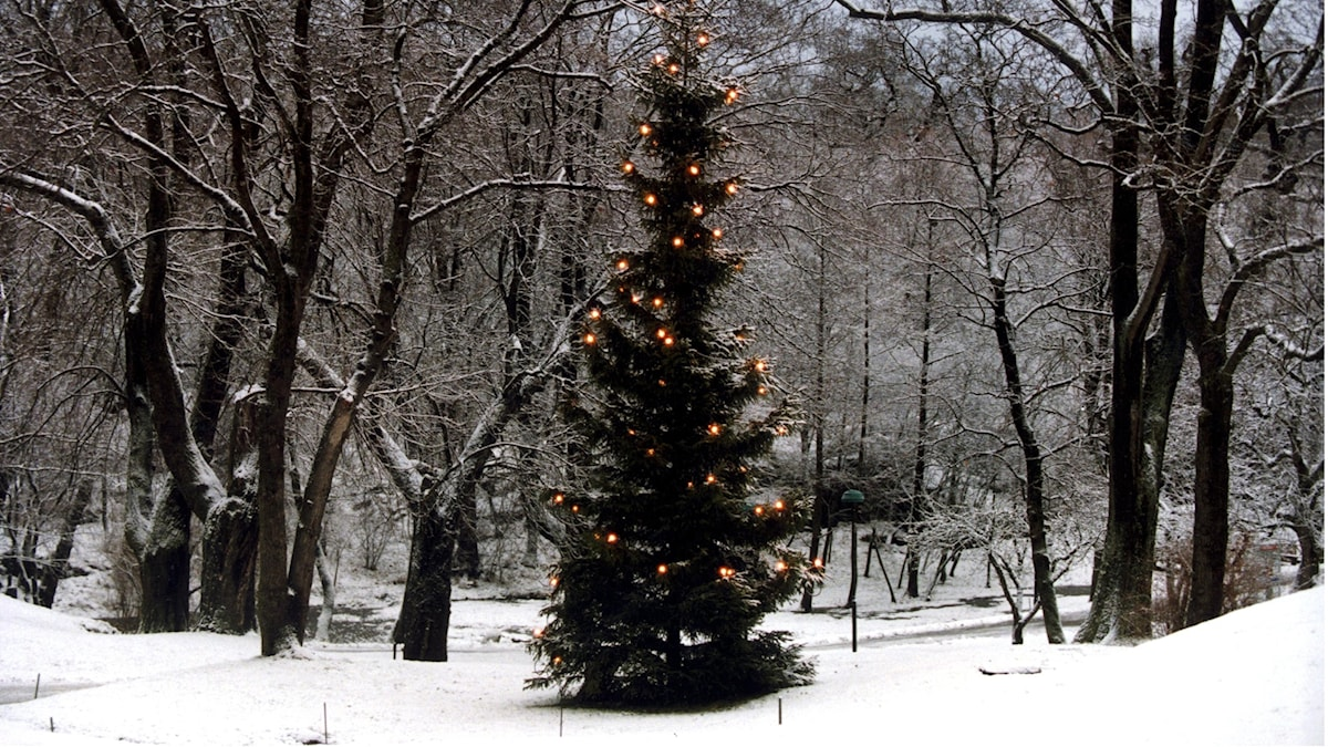 Julgran i skog