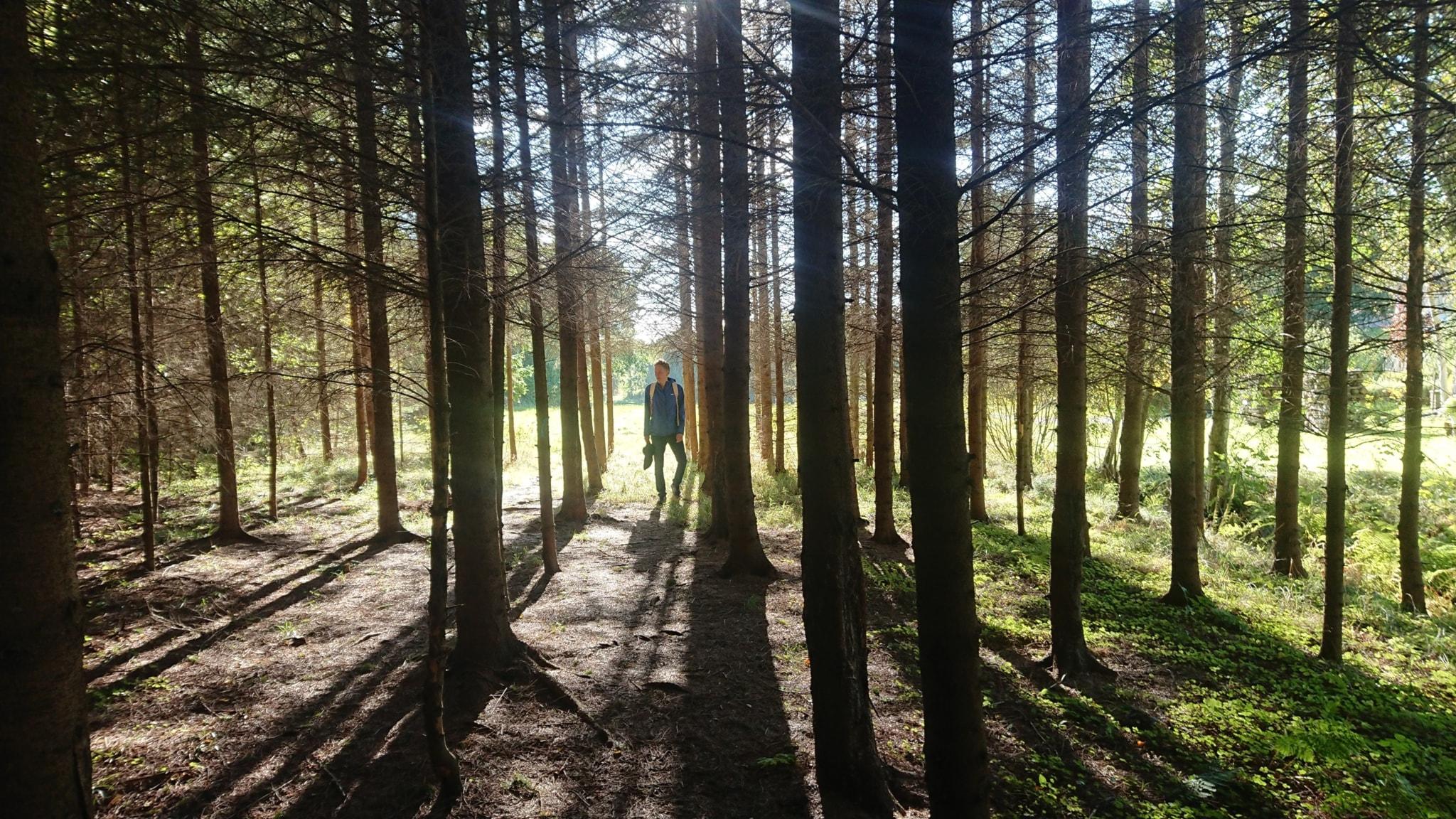 Den ljusa vandringen