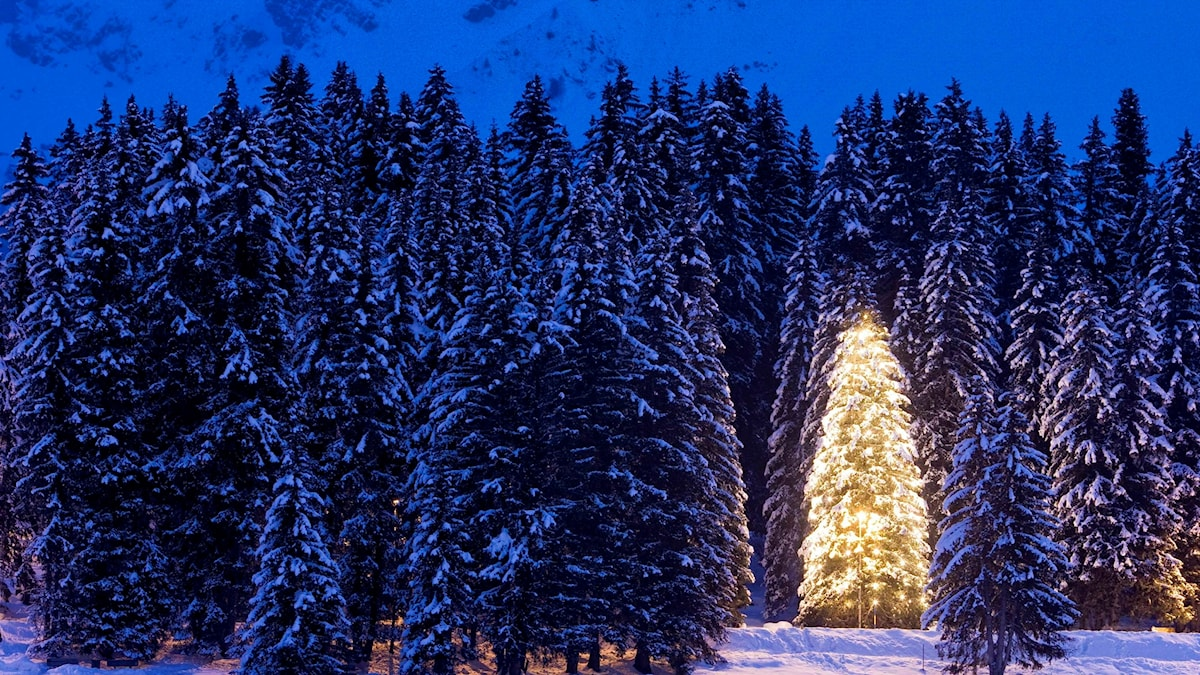 En julgran gör ingen skog