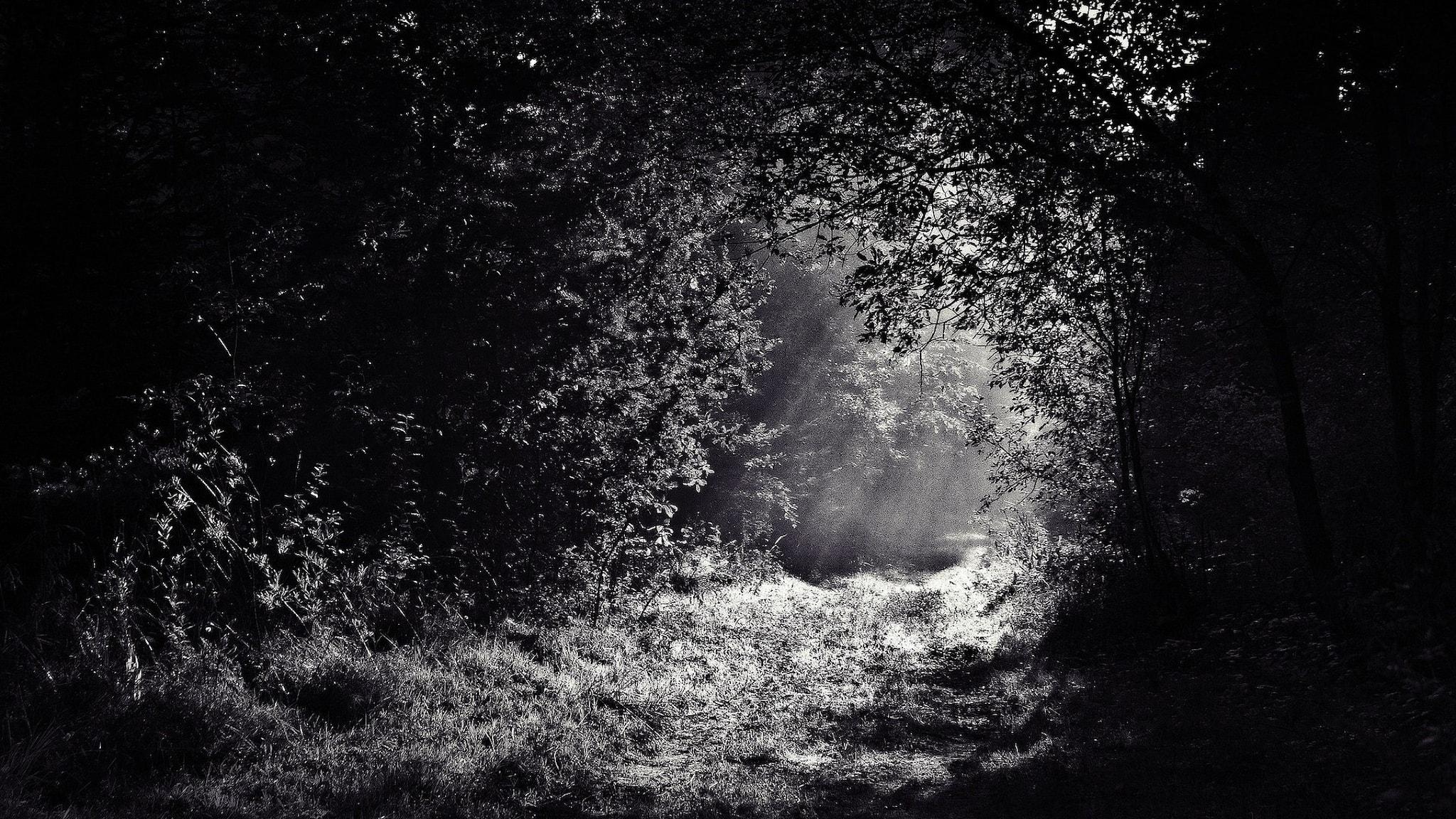 skog svartvitt