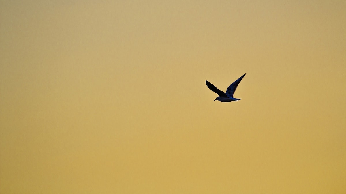 Fågel i skyn.