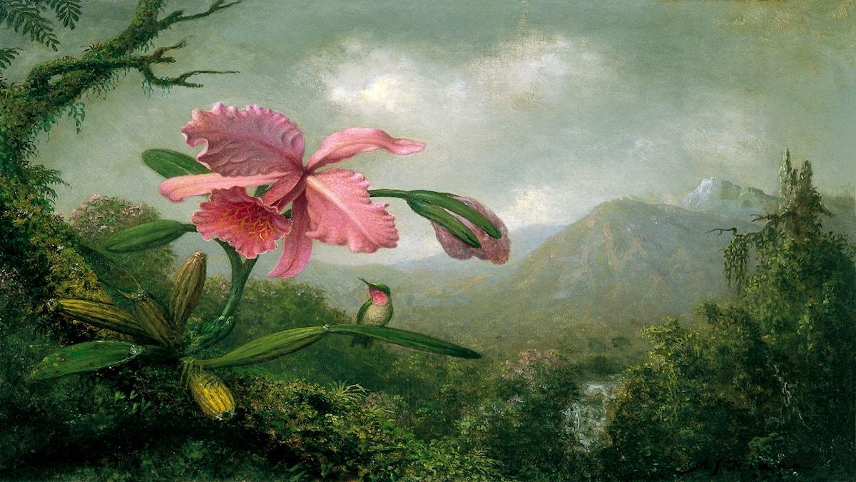 'Orkidé och näktergal vid vattenfall'. Martin Johnson Heade, 1902