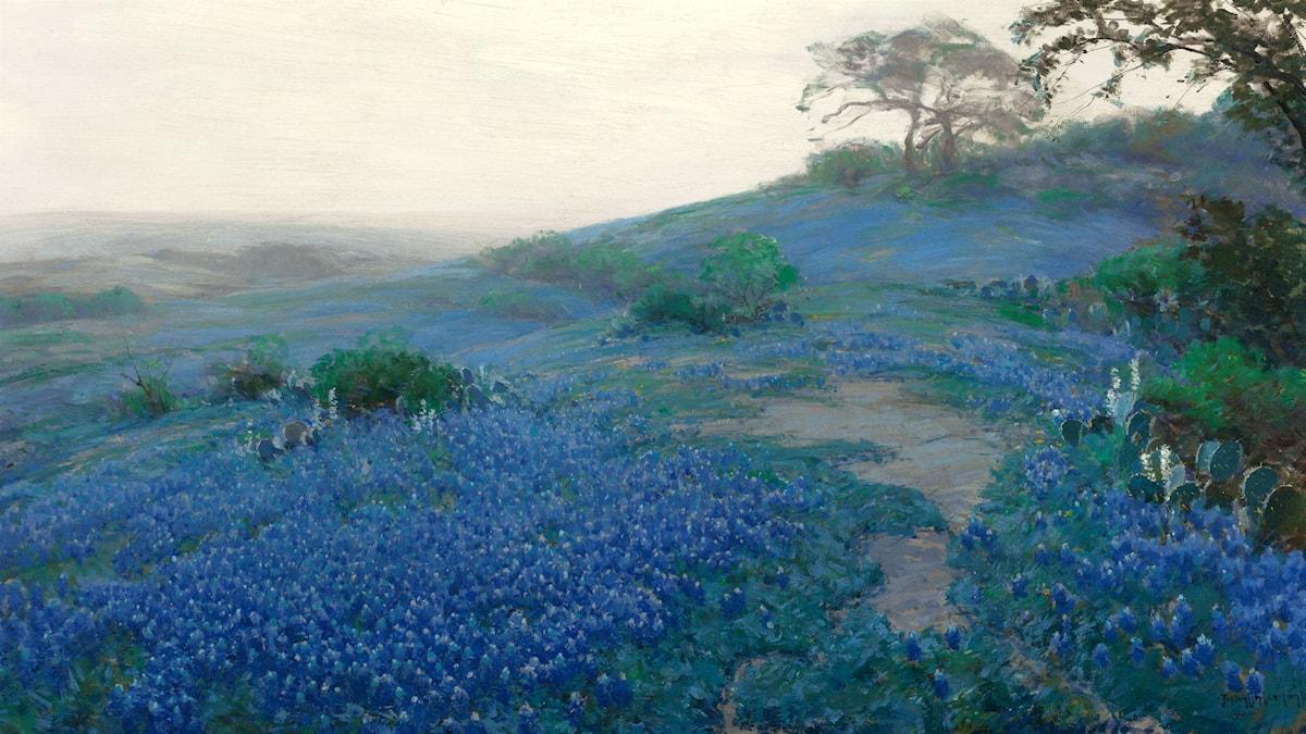 'Lupinfält, tidig morgon'. Julian Onderdonk, 1914