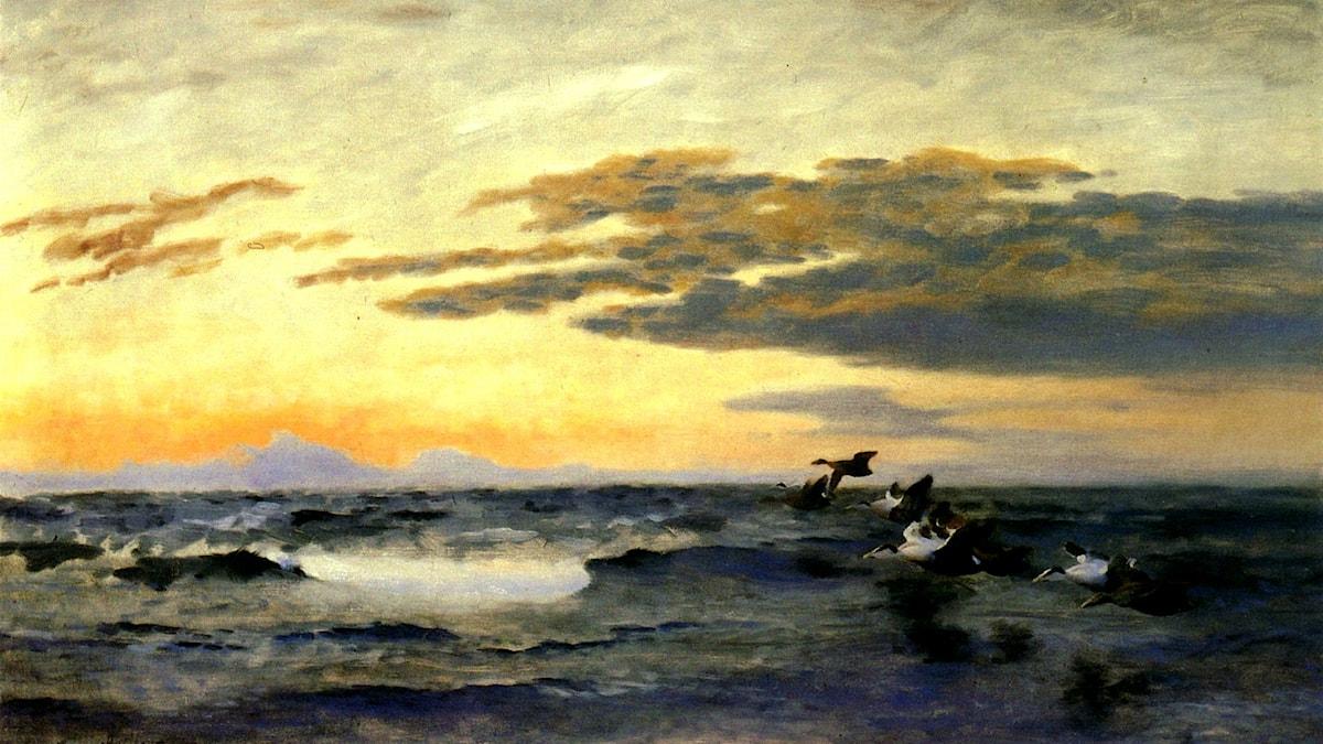 'Ejdrar i soluppgång'. Bruno Liljefors, 1928