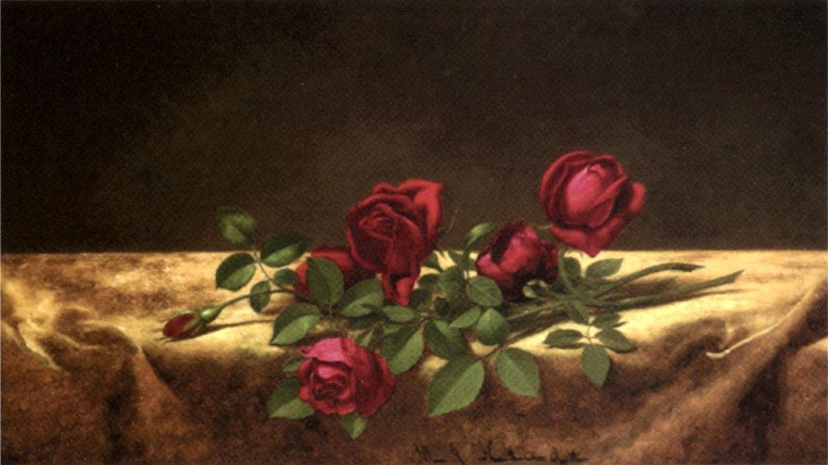 'Rosor på guldsammet'. Martin Johnson Heade (ca 1883-1900).