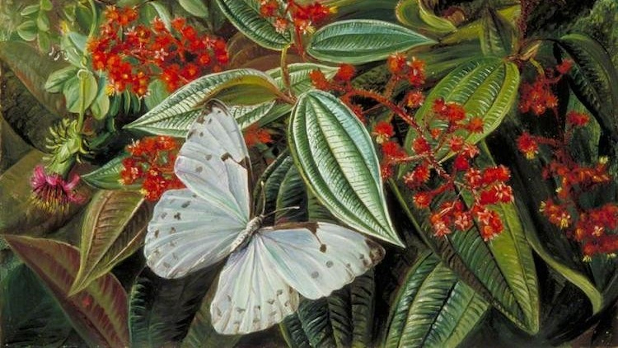 Trees laden with parasites and epiphytes in a brazilian garden. Marianne North -1873