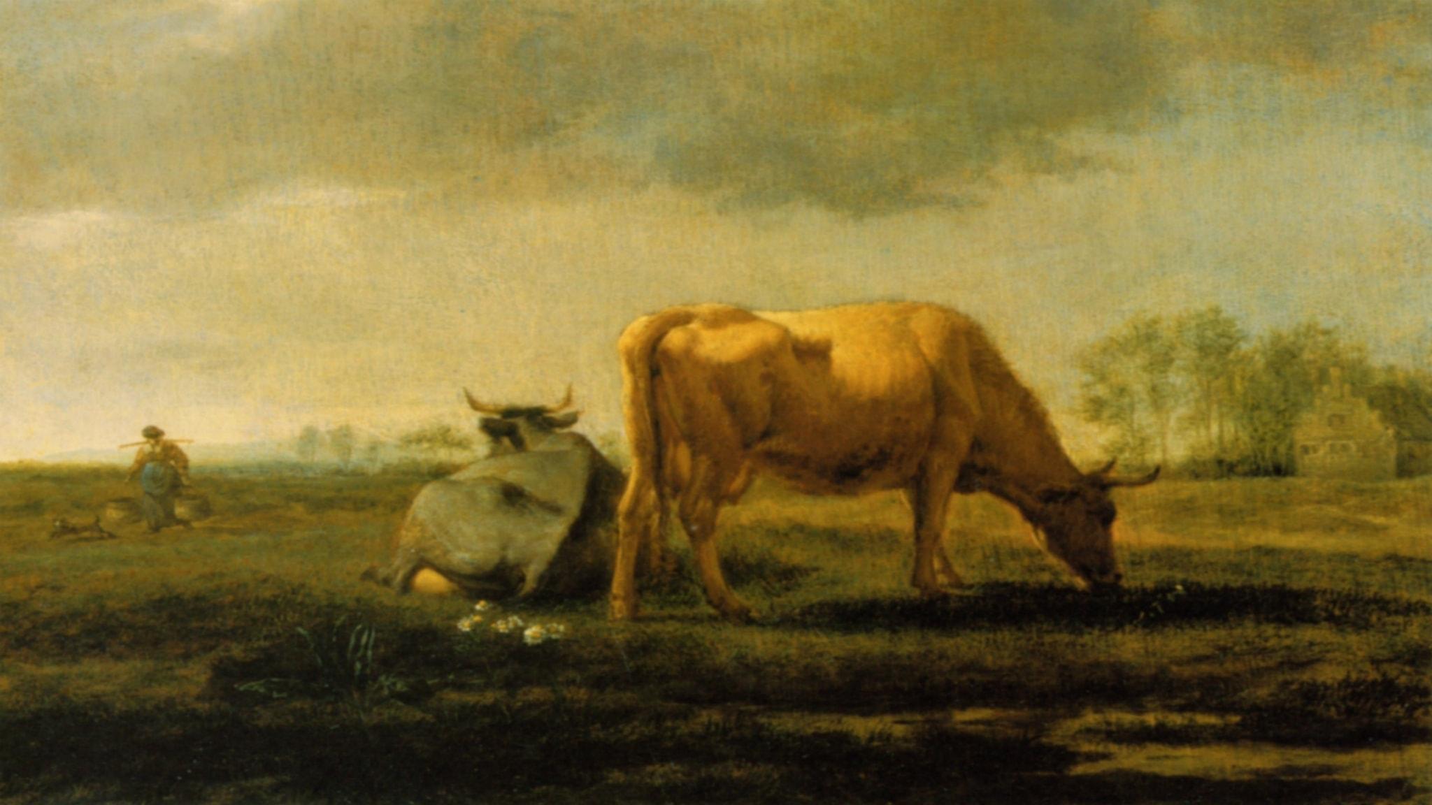 En honungsfärgad ko