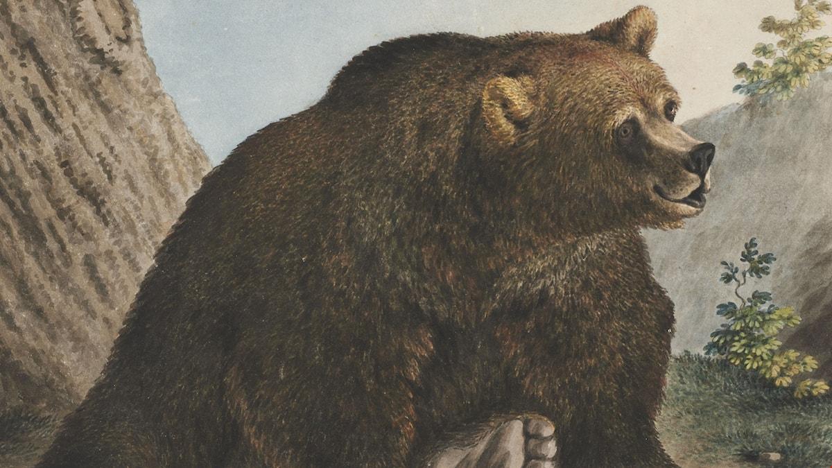 Bären Collection Gugelmann
