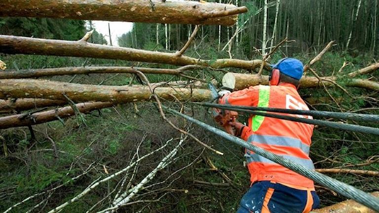 توفان گودرون باعث خسارات شدیدی در جنوب سوئد شد سوئد  Foto: Stig-Åke Jönsson/TT
