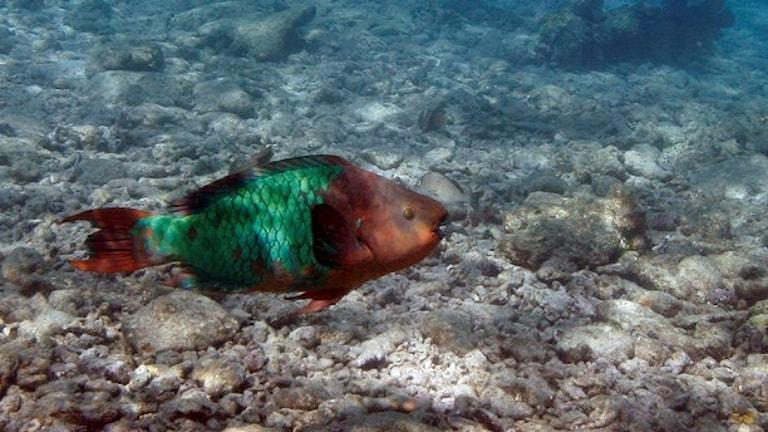 دریاهای جهان بسیاری از ماهیها و حیوانات خود را ازدست دادهاند