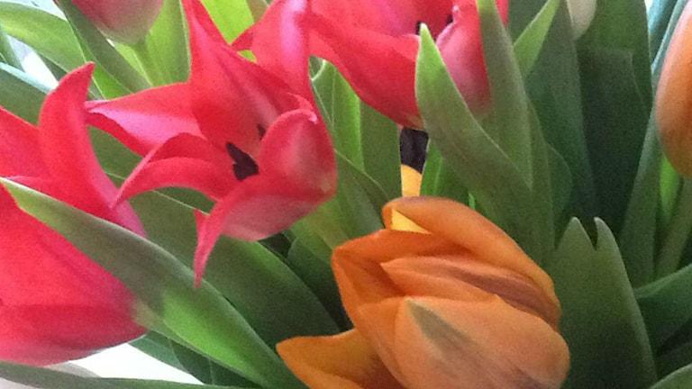 گل های نوروزی
