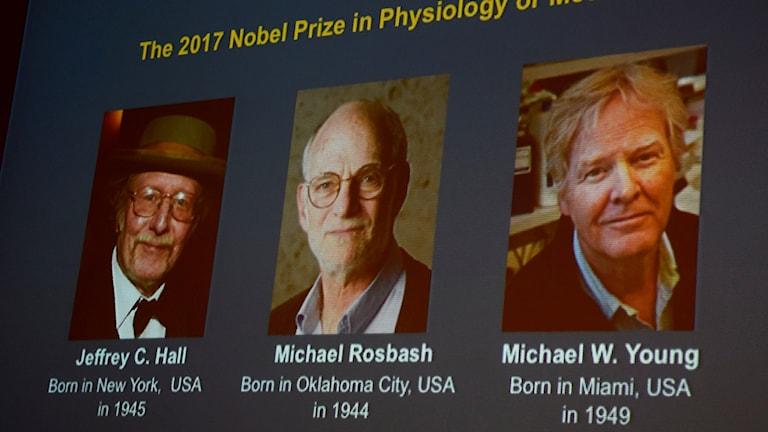نوبل للطب