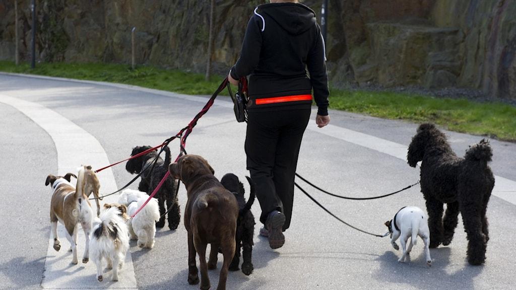 من سيقوم برعاية كلبك بعد العودة الى العمل في المكاتب مجددا؟